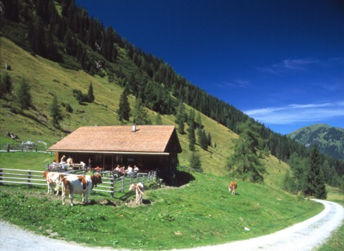Foto: Kloiber Gabi / Wander Tour / Hirschgrubenalm - Aschlreitalm  / Hirschgrubenalm 1.564 m / 23.08.2007 11:03:59