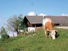 Foto: Tirol Werbung / Wander Tour / Adlerweg Etappe 92 - Tirolisch-Bayerische Almenrunde / Hitscheralm / 27.08.2007 08:57:12