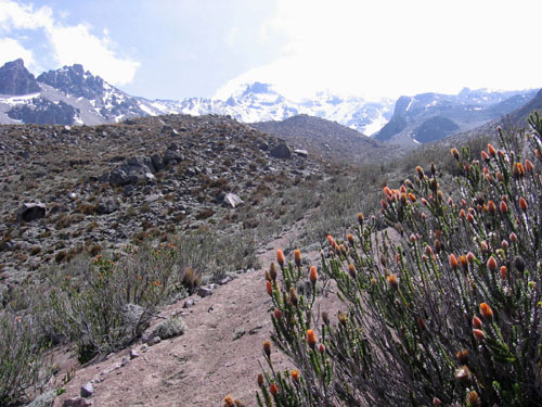 Foto: Andreas Koller / Wandertour / Wandertour in große Höhen im Chimborazo-Massiv (4463 m) / Exotische Vegetation im Hochtal hinter dem Chimborazo Basecamp von Marco Cruz (ca. 4200 m) / 27.12.2006 18:05:19